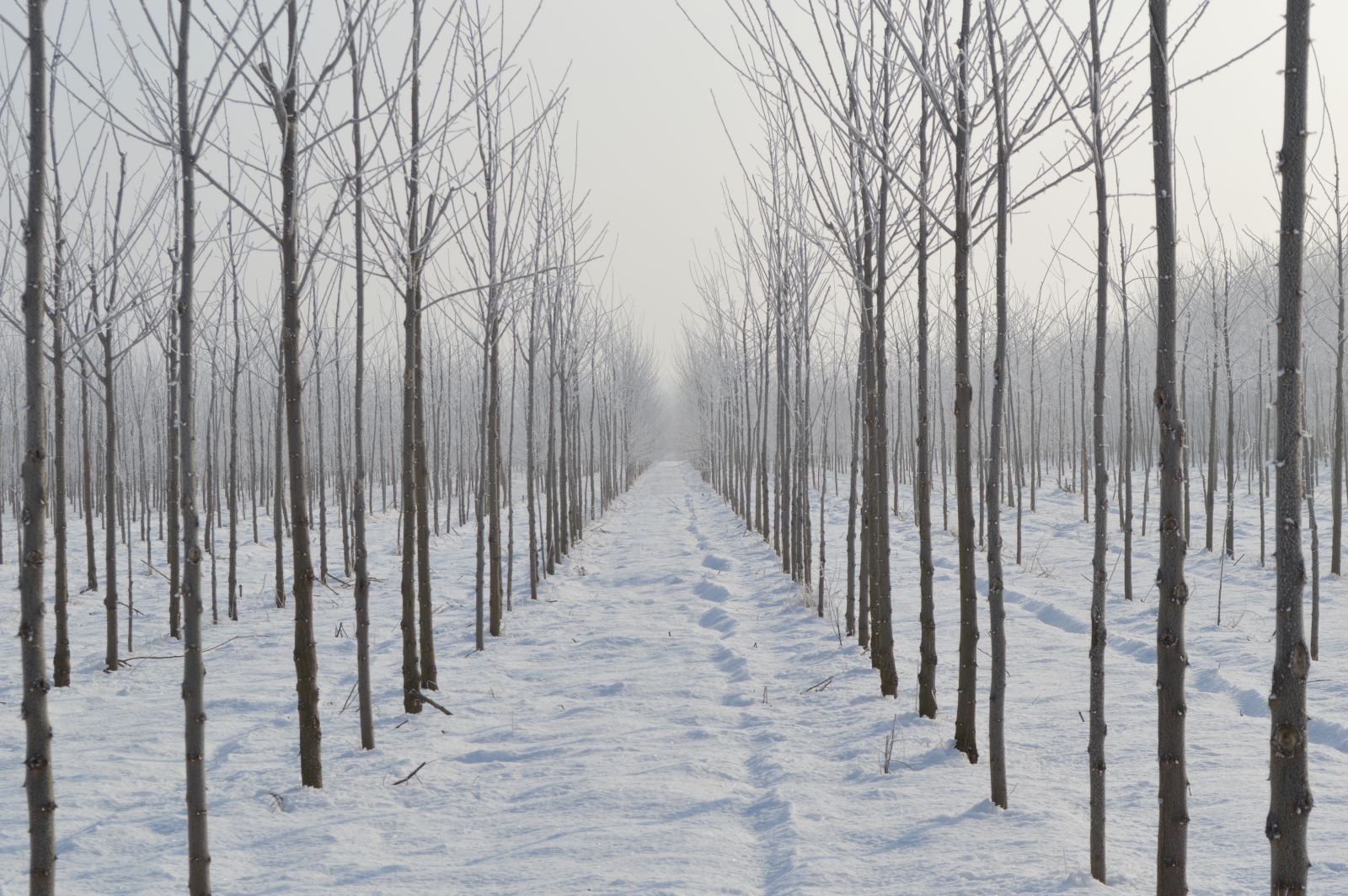 A téli Csemő