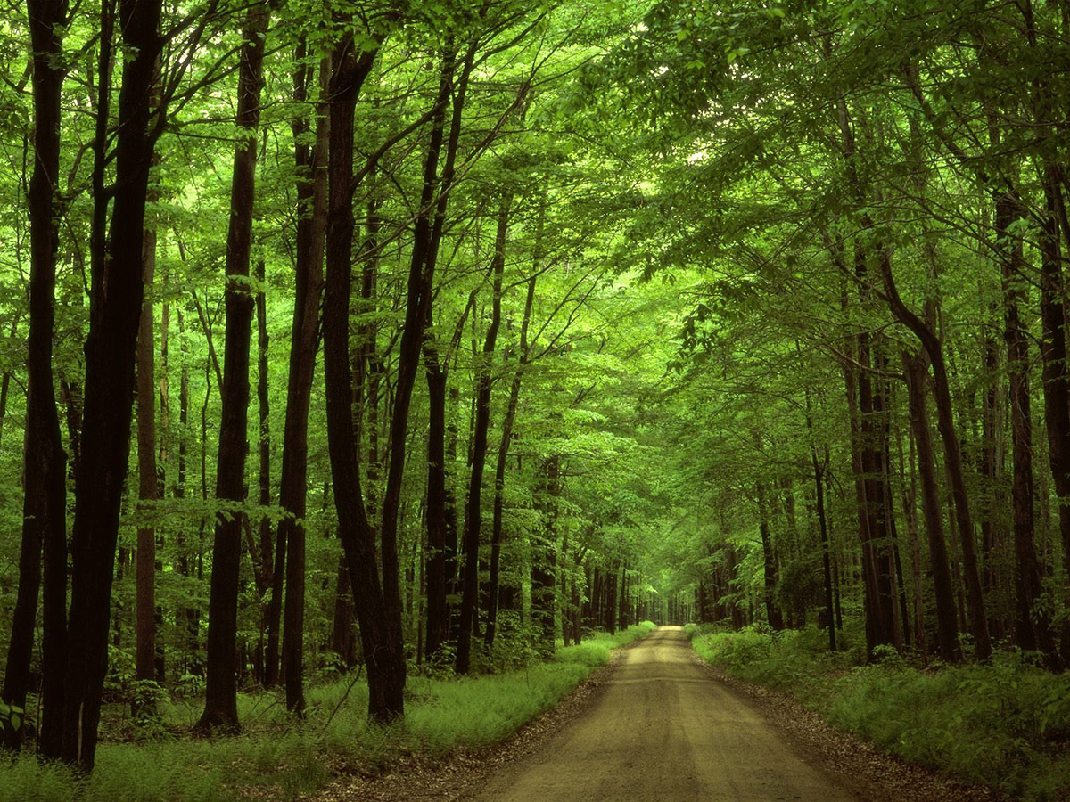 Agrár-erdészeti rendszerek támogatása