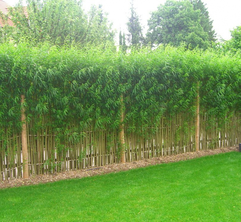 Egyedi tervezésű fűz pavilonok, kerítések!